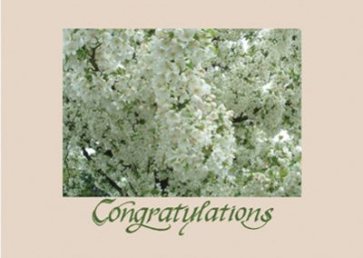 #16 Congratulations