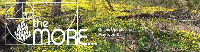 the MORE… Online Updates Volume 3.1.13 – May 02, 2018